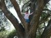 hike-8-11-12-tree